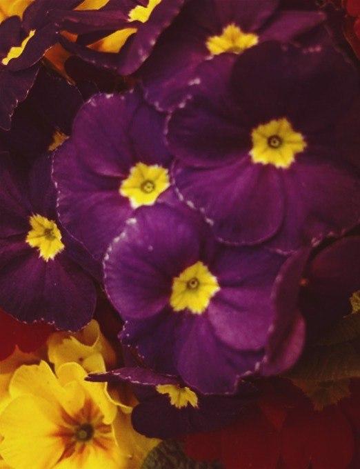 Скачать цветы, картинки - бесплатно 15