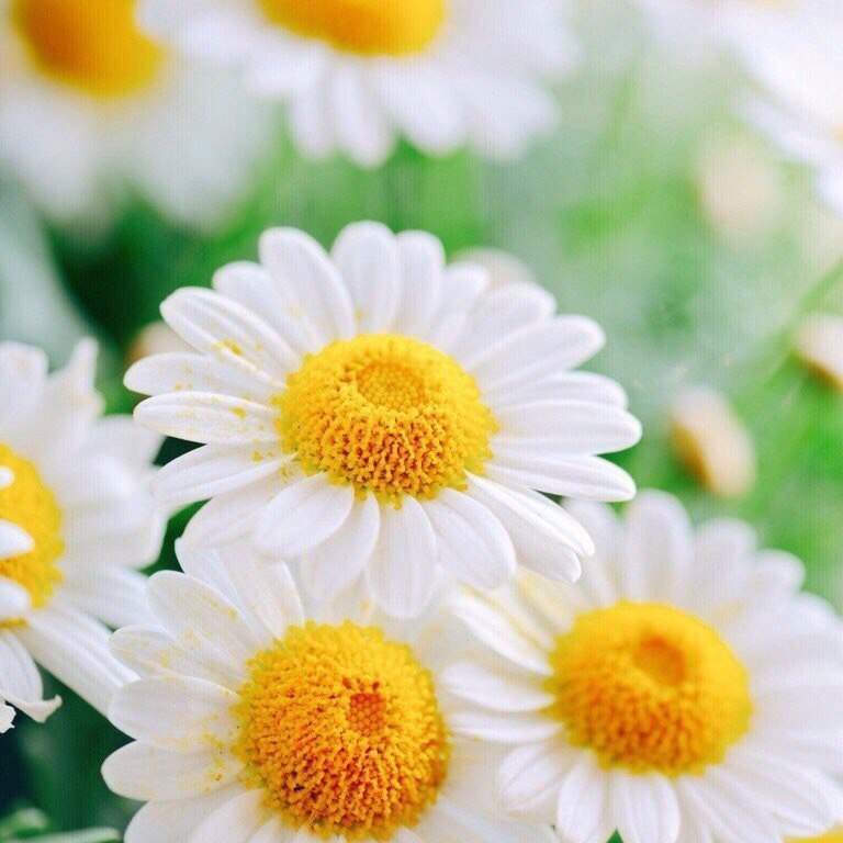 цветы картинки скачать