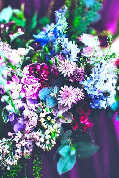 Скачать цветы, картинки - бесплатно 6