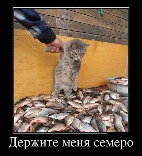 Смешные и прикольные картинки про рыбалку - смотреть бесплатно 13