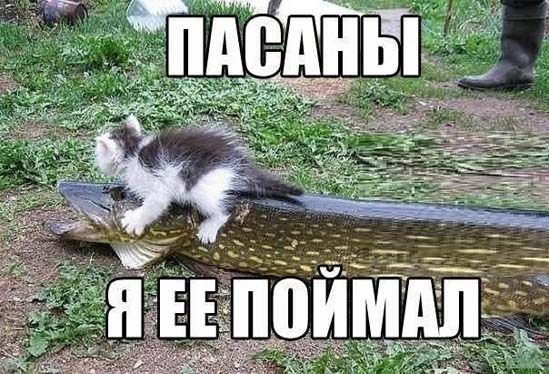 Смешные и прикольные картинки про рыбалку - смотреть бесплатно 8