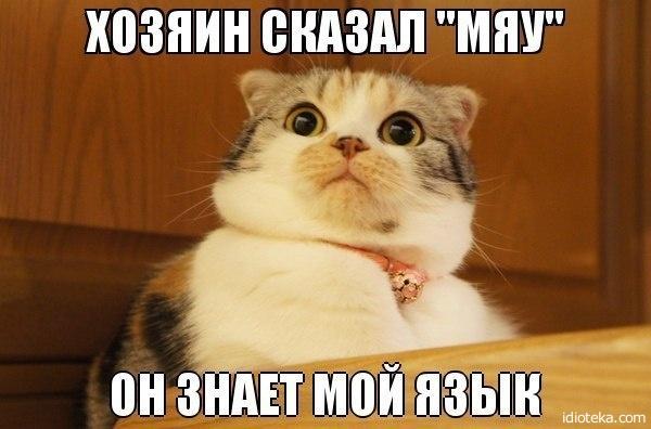 Смешные картинки с надписями про животных 12