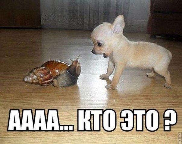 Смешные картинки с надписями про животных 9