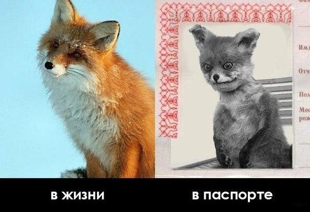 Смешные картинки с надписями про людей 14