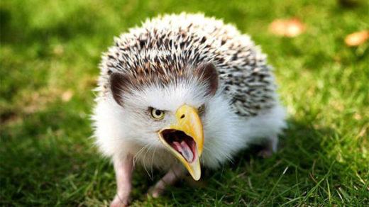 Смотреть картинки про животных - прикольные и смешные, бесплатно 10