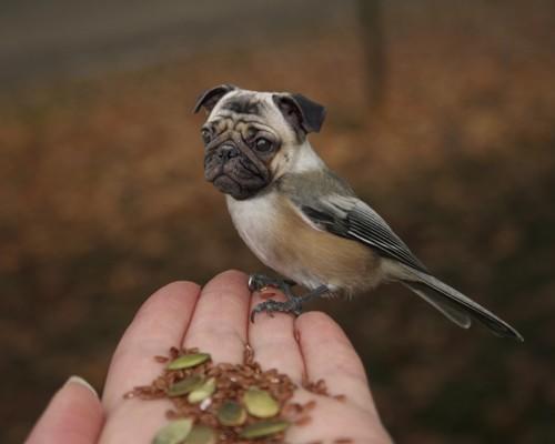 Смотреть картинки про животных - прикольные и смешные, бесплатно 12