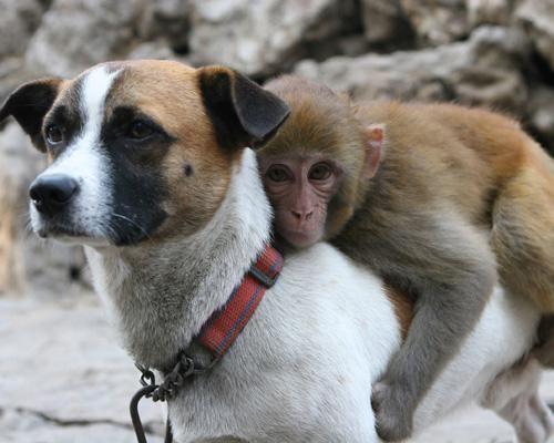 Смотреть картинки про животных - прикольные и смешные, бесплатно 5