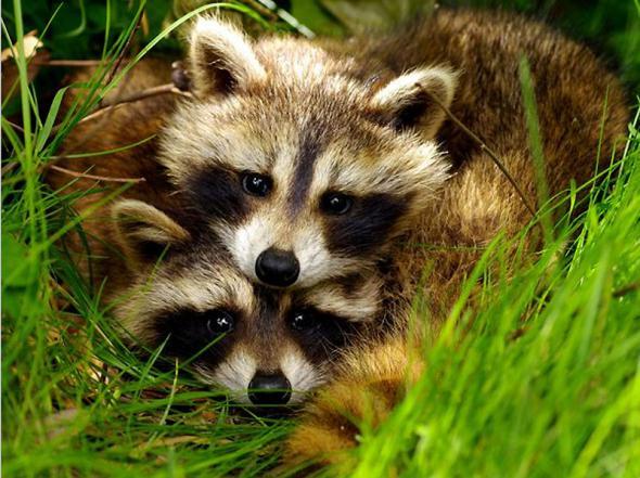 Смотреть картинки про животных - прикольные и смешные, бесплатно 7