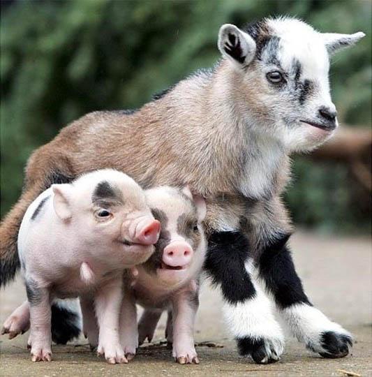 Смотреть картинки про животных - прикольные и смешные, бесплатно 9