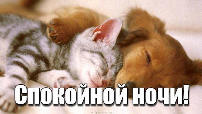 Ласковой ночи - Пожелания спокойной ночи - Gif