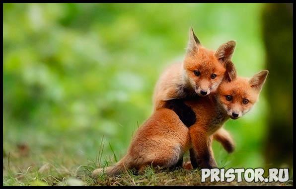 Фото животных для детей, красивые и прикольные животные для малышей и детей - фотографии 1