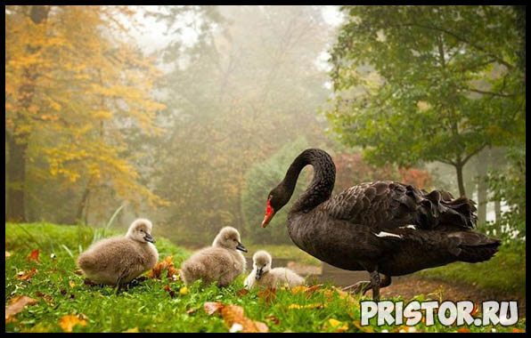 Фото животных для детей, красивые и прикольные животные для малышей и детей - фотографии 18