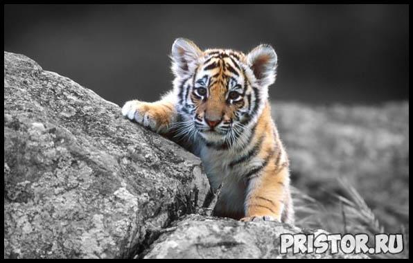 Фото животных для детей, красивые и прикольные животные для малышей и детей - фотографии 7