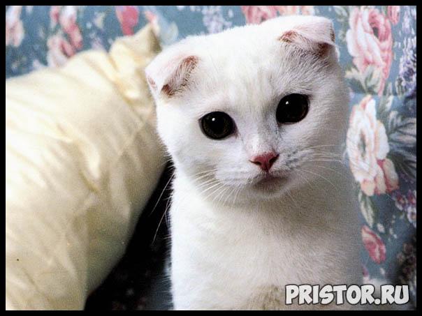 Фото кошек и котят разных пород - прикольные картинки 10