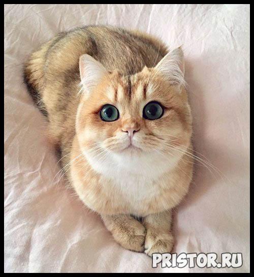 Фото кошек и котят разных пород - прикольные картинки 11