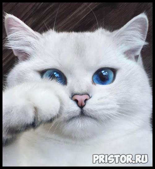 Фото кошек и котят разных пород - прикольные картинки 12
