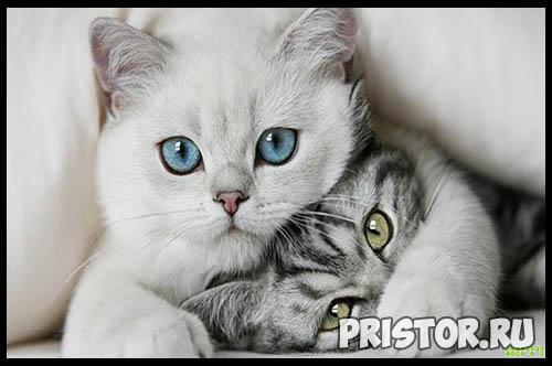 Фото кошек и котят разных пород - прикольные картинки 13