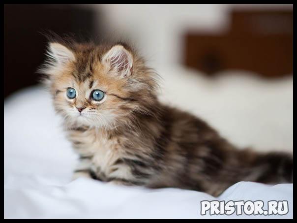Фото кошек и котят разных пород - прикольные картинки 14