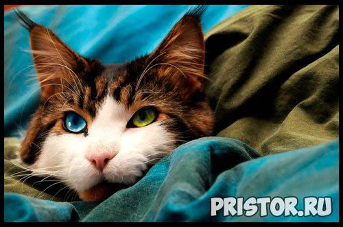 Фото кошек и котят разных пород - прикольные картинки 15