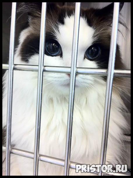 Фото кошек и котят разных пород - прикольные картинки 16