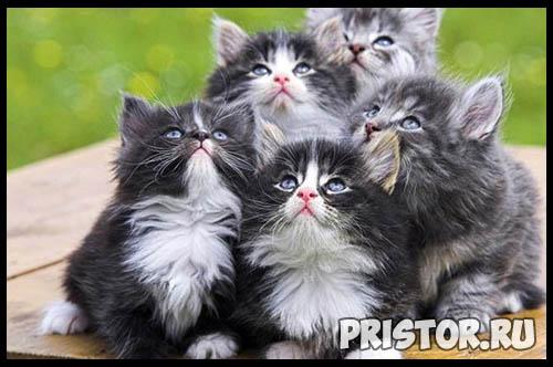 Фото кошек и котят разных пород - прикольные картинки 17