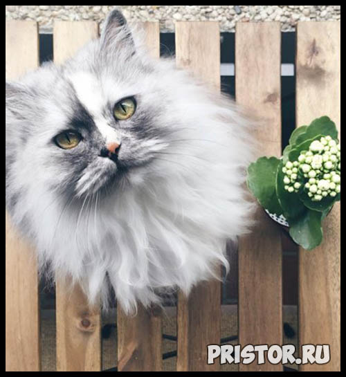 Фото кошек и котят разных пород - прикольные картинки 18