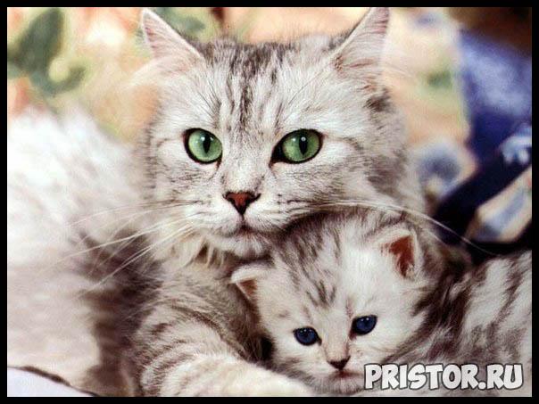Фото кошек и котят разных пород - прикольные картинки 3
