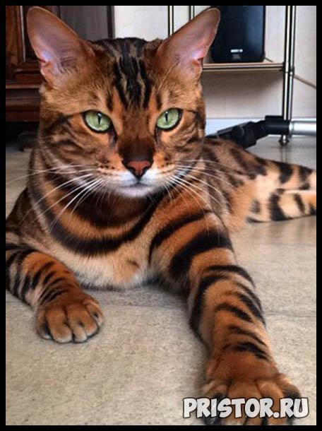 Фото кошек и котят разных пород - прикольные картинки 4