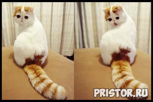 Фото кошек и котят разных пород - прикольные картинки 5