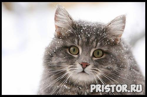 Фото кошек и котят разных пород - прикольные картинки 6