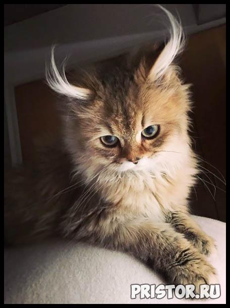 Фото кошек и котят разных пород - прикольные картинки 8