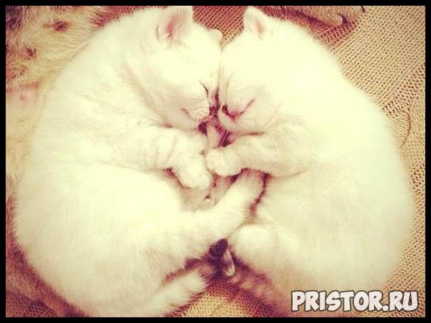 Фото кошек и котят разных пород - прикольные картинки