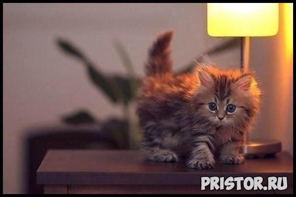 Фото кошек и собак прикольные картинки, классные фото кошек и собак 12