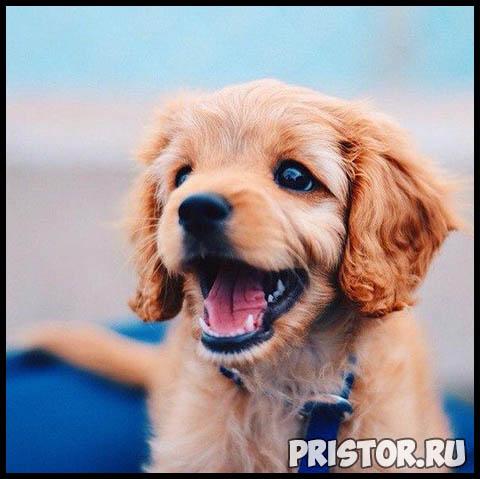 Фото кошек и собак прикольные картинки, классные фото кошек и собак 13
