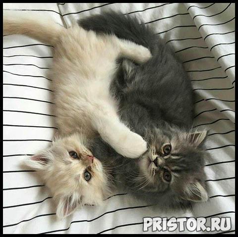 Фото кошек и собак прикольные картинки, классные фото кошек и собак 14