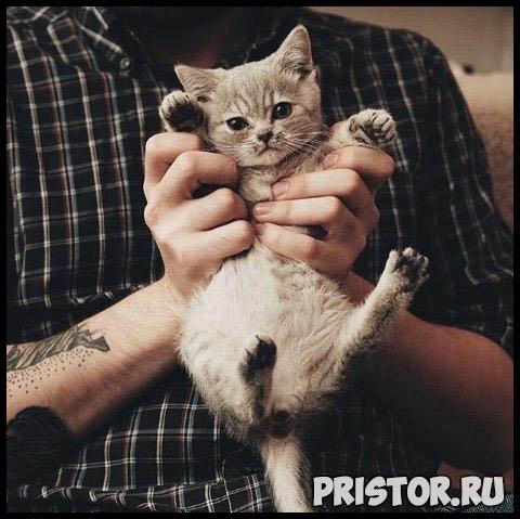 Фото кошек и собак прикольные картинки, классные фото кошек и собак 7
