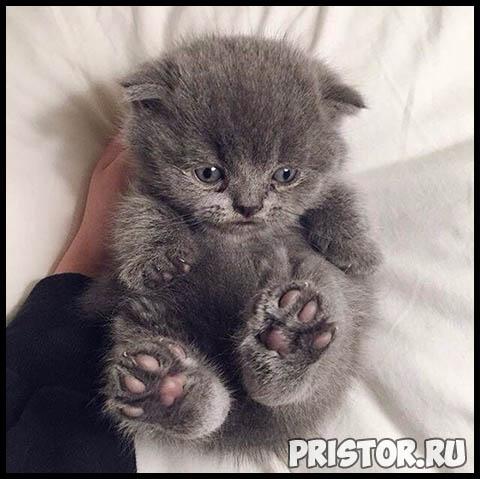 Фото кошек и собак прикольные картинки, классные фото кошек и собак 9