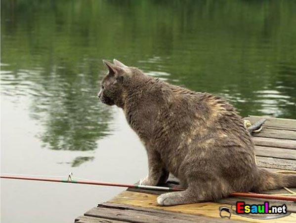 кот рыболов прикол