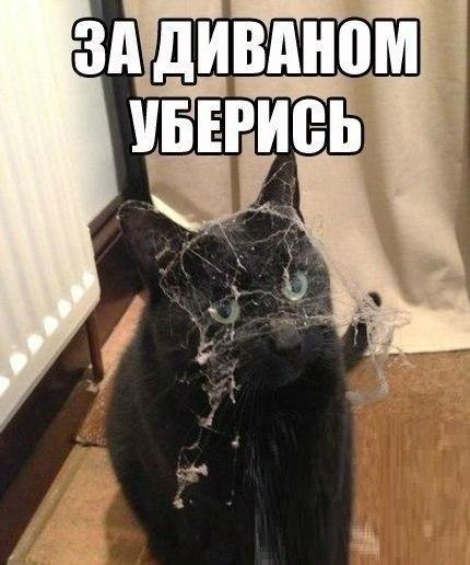 Фото приколы, смешные до слез с надписями 15