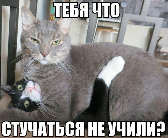 Фото приколы с животными до слез 17