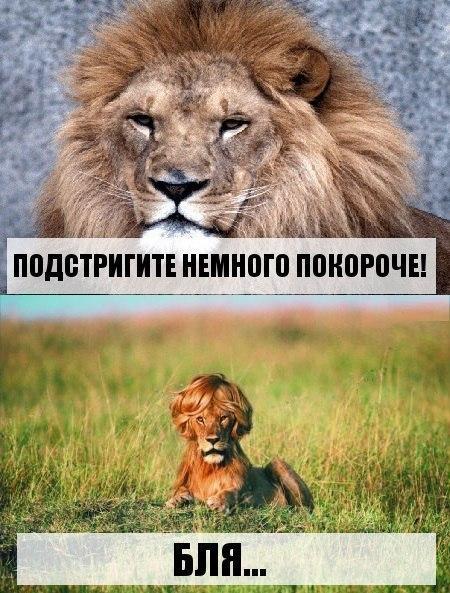 Фото приколы с животными до слез