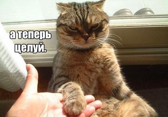 Смешные картинки с животными - с надписями смотреть 13