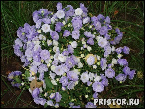 Комнатные цветы - каталог с фотографиями, обзор цветов 1