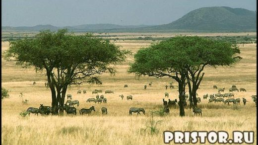 Природные зоны и их основные особенности