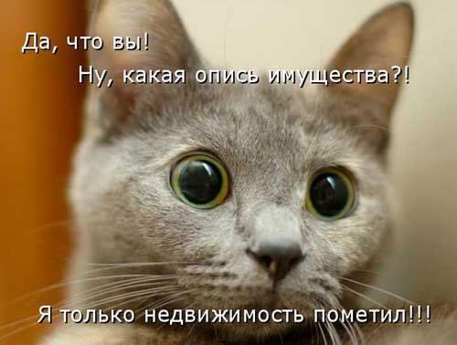 Смешные картинки с животными - с надписями смотреть 4