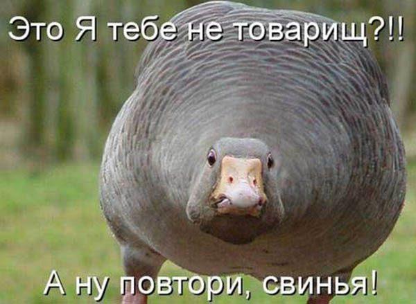 Смешные картинки животных с надписями - ржачные и прикольные 7