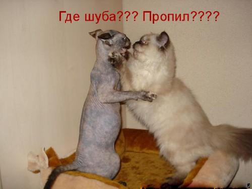 Смешные картинки с животными - с надписями смотреть 5