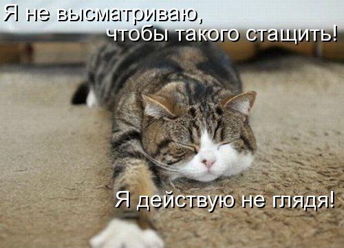 Смешные картинки с животными - с надписями смотреть 6