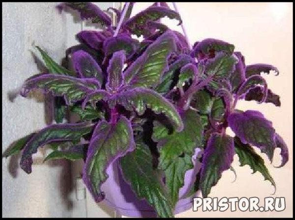 Комнатные цветы - каталог с фотографиями, обзор цветов 2