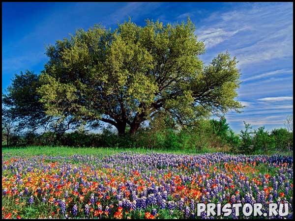 Фото лета, природа красивые фото и картинки лета 7